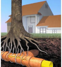 Root Control