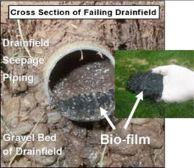 How Long Does It Take To Replace A Septic Drain Field